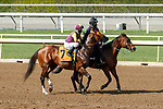 ARCADIA, CA  SEP 25:  #7 Big Runnuer, ridden by Juan Hernandez, in the post parade of the Eddie D Stakes (Grade ll) on September 25, 2020 at Santa Anita Park in Arcadia, CA. (Photo by Casey Phillips/Eclipse Sportswire/CSM.
