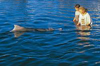children observing friendly wild Australian humpback dolphin, Sousa sahulensis, Queensland, Australia