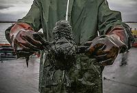 The Prestige tanker broke apart and sank November 19 off the coast of Spain, spilling an estimated 17,000 tons of oil into the sea and taking 60,000 tons to the bottom with it. © Pedro Armestre..El desastre del Prestige se produjo cuando un buque petrolero monocasco resultó accidentado el 13 de noviembre de 2002, mientras transitaba cargado con 77.000 toneladas de petróleo, frente a la costa de la Muerte, en el noroeste de España, y tras varios días de maniobra para su alejamiento de la costa gallega, acabó hundido a unos 250 km de la misma. La marea negra provocada por el vertido resultante causó una de las catástrofes medioambientales más grandes de la historia de la navegación, tanto por la cantidad de contaminantes liberados como por la extensión del área afectada, una zona comprendida desde el norte de Portugal hasta las Landas de Francia. El episodio tuvo una especial incidencia en Galicia, donde causó además una crisis política y una importante controversia en la opinión pública..El derrame de petróleo del Prestige ha sido considerado el tercer accidente más costoso de la historia. © Pedro Armestre
