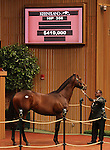 Hip #356 Unbridled's Song - Stormy Welcome colt at the Keeneland September Yearling Sale.  September 11, 2012.