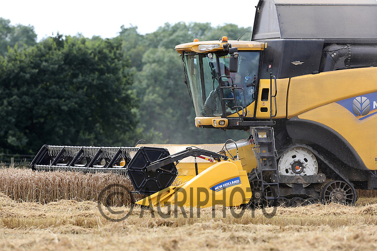 New Holland combine harvesting Wheat in Lincolnshire