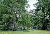 BS05-023z  Louisiana Swamp Atchafalaya Swamp