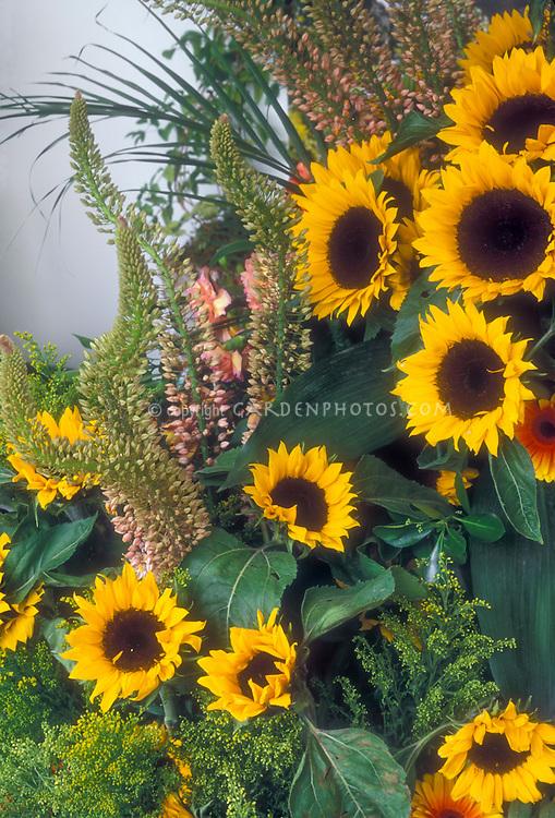 Sunflowers and Eremureus in bloom