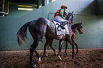 ARCADIA, CA -APRIL 08: Reach The World at Mike Smith walk to the track for the Santa Anita Derby at Santa Anita Park on April 08, 2017 in Arcadia, California. (Photo by Alex Evers/Eclipse Sportswire/Getty Images)