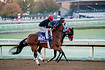 October 31, 2020: Wildman Jack, trained by trainer Doug F. O'Neill, exercises in preparation for the Breeders' Cup Turf Sprint at Keeneland Racetrack in Lexington, Kentucky on October 31, 2020. Scott Serio/Eclipse Sportswire/Breeders Cup/CSM