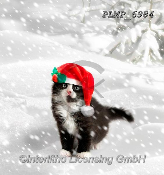 Marek, CHRISTMAS ANIMALS, WEIHNACHTEN TIERE, NAVIDAD ANIMALES, photos+++++,PLMP6984,#xa# ,kittens,cats