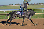 November 4, 2020: After Five, trained by trainer Wesley A. Ward, exercises in preparation for the Breeders' Cup Juvenile Turf at  Keeneland Racetrack in Lexington, Kentucky on November 4, 2020. Jessica Morgan/Eclipse Sportswire/Breeders Cup