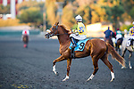 Karma King with Joe Talamo up at the Cash Call Futurity on December 14, 2013 at Betfair Hollywood Park in Inglewood, California .(Alex Evers/ Eclipse Sportswire)