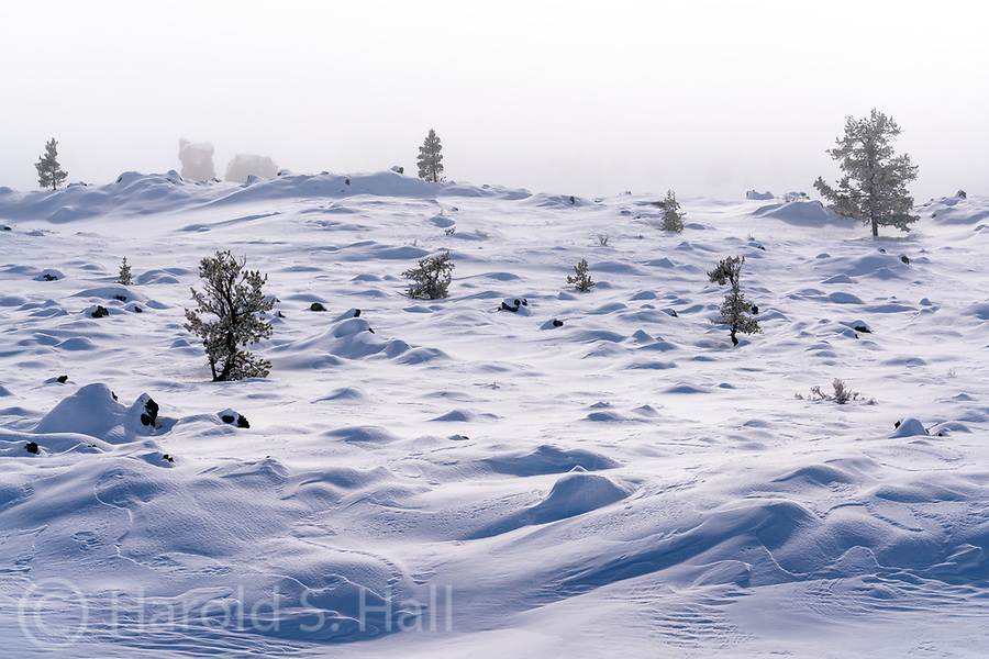 The Idaho State Park Craters of the Moon is normally black with basalt rocks.  Here the landscape is covered by a fresh blanket of snow.