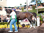 Zenyatta dances for fans in the Paddock before she marks her 18th victory, winning the Clement L. Hirsch Stakes at Del Mar Thorobred Club, Del Mar, CA