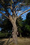 GANDIT Aurelie - Perchee dans les arbres