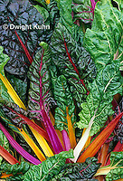 HS80-004z  Bright Lights Swiss Chard or Multicolor Chard