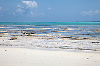Jambiani, Zanzibar, Tanzania.  Low Tide on the Eastern Side of the Island.  Women cultivate seaweed on these tide flats for export.  Piles of Stones cover buried coconut husks.  After several weeks they will be dug up to be made into coir rope.