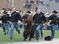 Colorado Mascot Ralphie V runs around the field before the game between California and Colorado at Folsom Field in Boulder, Colorado on November 16th, 2013.  Colorado defeated California, 41-24.