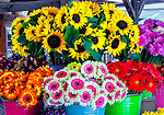 Fresh picked flowers at Avila Valley Barn, farm stand and petting zoo in Avila Valley, San Luis Obispo County, California