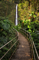 Pathway to Akaka Falls. Akaka Falls State Park. Hawaii, The Big Island
