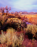 Pleasant Creek and Capitol Reef Henry Mountain Resource Area Utah