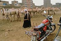 - cattle market ....- mercato del bestiame