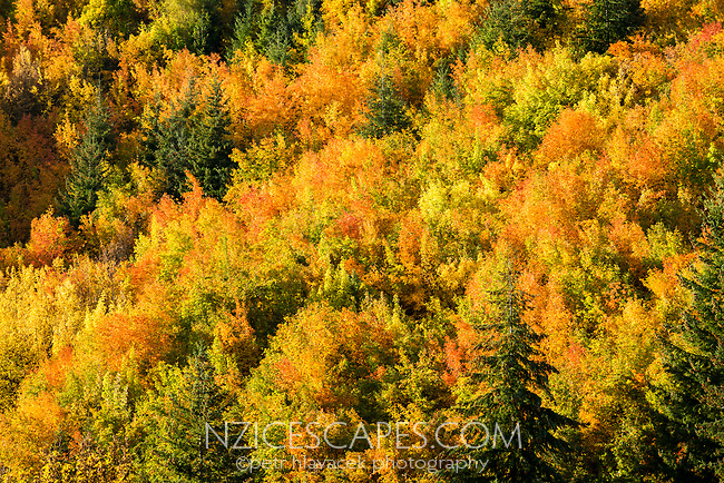 Autumn colours in Arrowtown, Central Otago, South Island, New Zealand, NZ