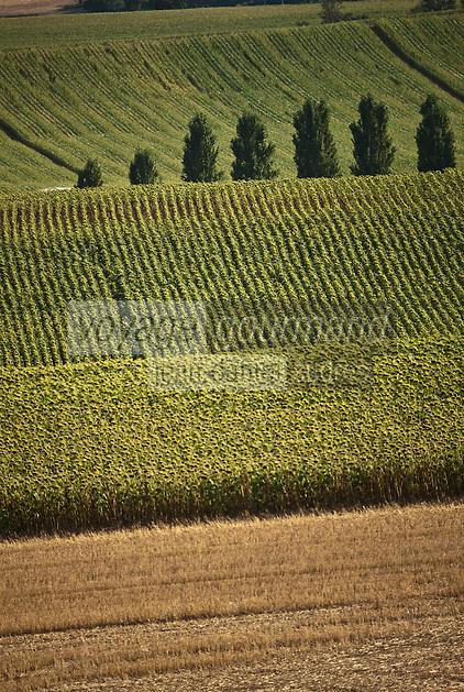 Europe/France/Midi-Pyrénées/32/Gers/Env de Fleurance: Paysage agricole - Champ de maïs