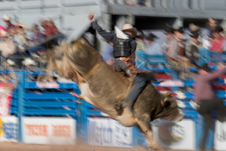 February, 2004 At the Tucson Rodeo, Bull Riding competition in Tucson, Arizona.. .For Editorial use only / Permission from Pro Rodeo Cowboy's Association REQUIRED for any commercial usage..