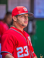 14 April 2013: Washington Nationals catcher Jhonatan Solano stands in the dugout prior to a game against the Atlanta Braves at Nationals Park in Washington, DC. Solano was called up from Triple-A to replace the injured Wilson Ramos. The Braves shut out the Nationals 9-0 to sweep their 3-game series. Mandatory Credit: Ed Wolfstein Photo *** RAW (NEF) Image File Available ***