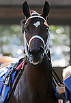 Havre de Grace walks in the paddock before the Delaware Handicap, in which she finished a close second to Blind Luck.  (Joan Fairman Kanes/Eclipsesportswire)