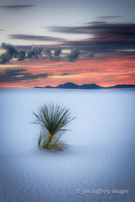 A solitary yucca at twilight at White Sands National Monument.