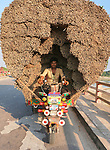 Workers sit on vehicles laden with hundreds of kilograms of jute sticks.  The men are cocooned on the seats of their brightly coloured bikes by thousands of the plants as they drive the 3 metre-high loads almost 5km to the nearby market.<br /> <br /> The unusual images were captured in Kushita in Bangladesh by amateur photographer Sabina Akter.  SEE OUR COPY FOR DETAILS.<br /> <br /> Please byline: Sabina Akter/Solent News<br /> <br /> © Sabina Akter/Solent News & Photo Agency<br /> UK +44 (0) 2380 458800
