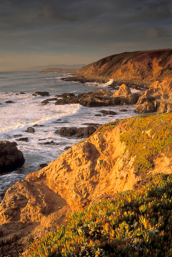 Sunset light on golden coastal cliffs , rocks, and waves, Bodega Head, Sonoma County Coast, California.