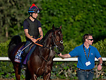 October 28, 2014:  Caspar Netscher, trained by David Simcock, exercises in preparation for the Breeders' Cup Turf Sprint at Santa Anita Race Course in Arcadia, California on October 28, 2014. Scott Serio/ESW/CSM