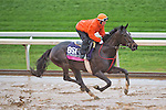 October 28, 2015 :   Andreya's Reward, trained by Milton W. Wolfson and owned by NTS Stable & Kathryn Davey, exercises in preparation for the Breeders' Cup Juvenile Fillies Turf at Keeneland Race Track in Lexington, Kentuckyon October 28, 2015. Scott Serio/ESW/CSM