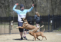 Stephanie Fitzpatrick of Bentonville plays with dogs, Thursday, April 1, 2021 at the Bentonville Dog Park in Bentonville. Check out nwaonline.com/210402Daily/ for today's photo gallery. <br />