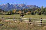 Horse grazing in a pasture near Telluride, Colorado. John offers autumn photo tours throughout Colorado.