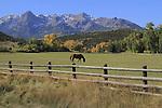 Horse grazing in a pasture near Telluride, Colorado. John offers autumn photo tours throughout Colorado.