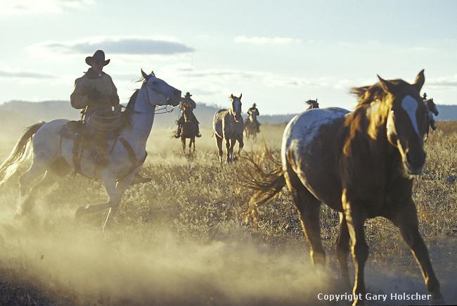 Cowboys wrangling horses. Ponderosa Ranch, Seneca, OR.