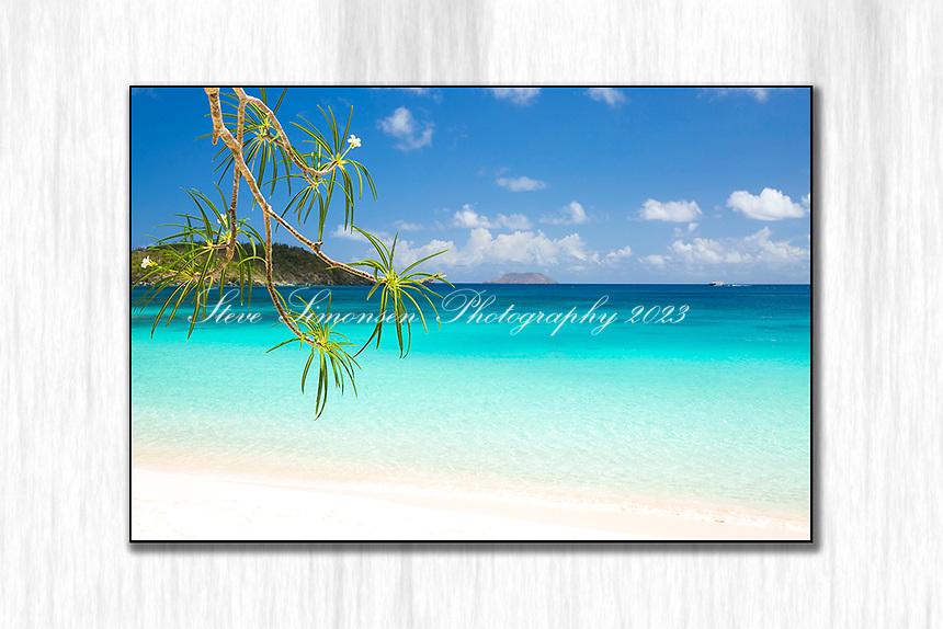 Hawksnest Beach with frangipani flowers<br /> St. John<br /> US Virgin Islands