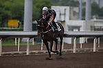DEC 12,2015: Preferment ,trained by Chris Waller,exercises in preparation for the Hong Kong Vase at Sha Tin in New Territories,Hong Kong. Kazushi Ishida/ESW/CSM