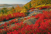 Blueberries on Champlain Mountain and Great Head<br /> Acadia National Park<br /> Mount Desert Island,  Maine