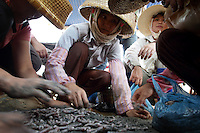 Local minority women look over their catch from collecting worms in the mangroves of the Leizhou Peninsula, Guangdong Province. Over the past century, the world has lost over 50% of its coastal mangroves. They have been cleared mainly to make way for commercial shrimp and fish farms. The unique trees which live in salt water are valued for the ability to protect shorelines and are home to a diverse array of flora and fauna. 2010