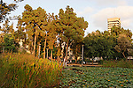 G-221 Meir Garden in Tel Aviv