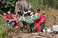 Thai search and rescue teams use elephants to clear rubble, find and remove bodies from areas where machines cannot reach, following the tsunami which struck South Asia on 26/12/2004.