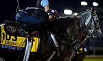 October 31, 2018 : Catholic Boy gets a hug from his exercise rider at Churchill Downs on October 31, 2018 in Louisville, Kentucky. Evers/ESW/Breeders Cup