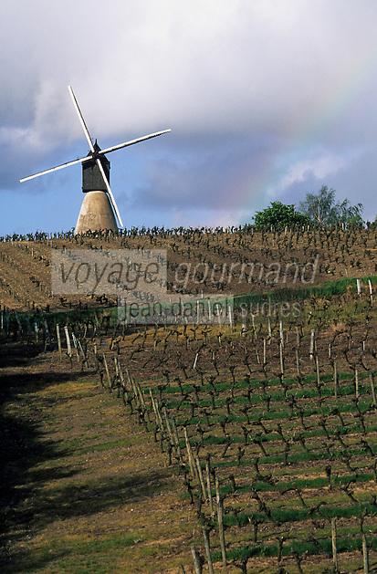 Europe/France/Pays de la Loire/49/Maine-et-Loire/Thouarcé: Le moulin de la Montagne et le vignoble côteaux du Layon
