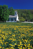 church, dandelions, Vermont, VT, Arlington, Scenic view of The Church at the Green in a field of dandelions in West Arlington in the spring.