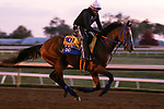 By My Standards, trained by trainer W. Bret Calhoun, exercises in preparation for the Breeders' Cup Classic at Keeneland Racetrack in Lexington, Kentucky on November 5, 2020.
