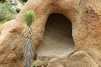 Joshua tree and cave. Joshua Tree National Park, California