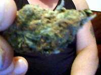 Pictured: A picture taken from Robert Riley's twitter page showing him rolling a cannabis cigarette.<br />