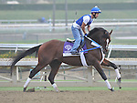 Tapizar, trained by Steve Asmussen,exercises in preparation for the upcoming Breeders Cup at Santa Anita Park on November 1, 2012.