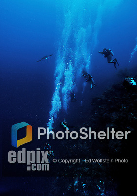 11 June 2014:: A group of SCUBA divers explore the drop-off and reef scenery at Lemon Wall, encountering a Manta Ray (M. birostris), on the North Shore of Grand Cayman Island. Located in the British West Indies in the Caribbean, the Cayman Islands are renowned for excellent scuba diving, snorkeling, beaches and banking.  Mandatory Credit: Ed Wolfstein Photo *** RAW (NEF) Image File Available ***